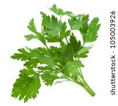 parsley isolated on white | Shutterstock . vector #105003926