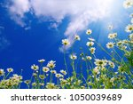 field of daisies  blue sky and... | Shutterstock . vector #1050039689
