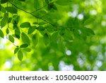 summer branch with fresh green... | Shutterstock . vector #1050040079