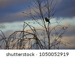 bird on the tree. animal in... | Shutterstock . vector #1050052919