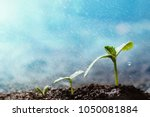 green seedling growing on the... | Shutterstock . vector #1050081884