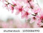 blooming flowers in spring | Shutterstock . vector #1050086990