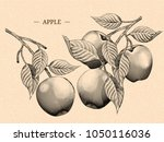 engraving apples with leaves ... | Shutterstock .eps vector #1050116036