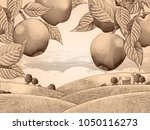 retro apple orchard  engraving... | Shutterstock .eps vector #1050116273
