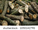 firewood for the winter  stacks ... | Shutterstock . vector #1050142790