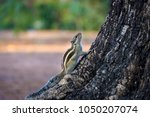 squirrels are members of the... | Shutterstock . vector #1050207074