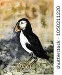 rustic painting of a puffin on... | Shutterstock . vector #1050211220