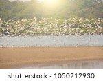 A Flock Of White Gulls Flies...