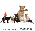 group of pets. isolated on... | Shutterstock . vector #1050239354