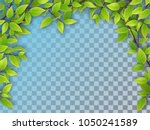 realistic vector tree branches... | Shutterstock .eps vector #1050241589