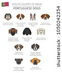 dogs by country of origin.... | Shutterstock .eps vector #1050242354
