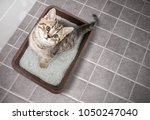 Stock photo cat top view sitting in litter box with sand on bathroom floor 1050247040
