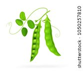 peas isolated on white photo... | Shutterstock .eps vector #1050257810