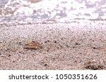 pair of gold wedding rings on... | Shutterstock . vector #1050351626