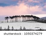 pines on the braes of abernethy ... | Shutterstock . vector #1050374279