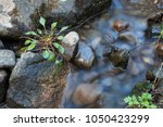 Small Stream And Rocks At...