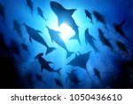 a variety of marine and ocean... | Shutterstock . vector #1050436610