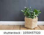 plant in a tub against a gray... | Shutterstock . vector #1050457520