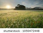 spring daisy flowers at motning ...   Shutterstock . vector #1050472448