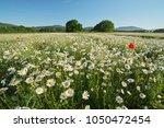 spring daisy flowers  in meadow....   Shutterstock . vector #1050472454