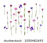 blue and pink wildflowers ... | Shutterstock . vector #1050482693