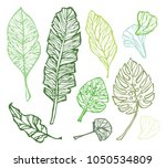 hand drawn doodle tropical palm ... | Shutterstock .eps vector #1050534809