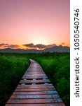 leading path in mangrove forest | Shutterstock . vector #1050540746