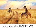 group of giraffes near the road ... | Shutterstock . vector #1050561473