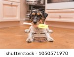 Small Cute Dog Cooking And...