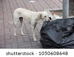 content in stray dogs and rabies   Shutterstock . vector #1050608648
