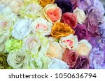 colorful design pattern of... | Shutterstock . vector #1050636794