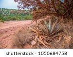 desert scene landscape agave... | Shutterstock . vector #1050684758