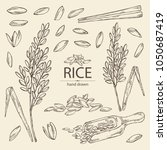 collection of rice  plant ... | Shutterstock .eps vector #1050687419