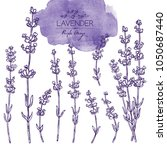 collection of lavender  twig ... | Shutterstock .eps vector #1050687440