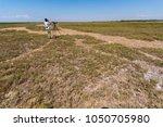 bird watcher  tweecher in... | Shutterstock . vector #1050705980