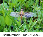 Close Up Of The Dragonfly The...