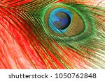 peacock feather. carnival....   Shutterstock . vector #1050762848