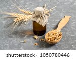 fresh sprouted wheat seeds in... | Shutterstock . vector #1050780446