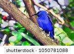 pretty blue bird on a wooden...   Shutterstock . vector #1050781088