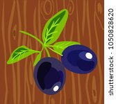 black olives on a branch.... | Shutterstock .eps vector #1050828620