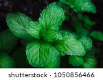 green mint leaves.nature... | Shutterstock . vector #1050856466