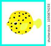 the cube shaped boxfish is just ... | Shutterstock .eps vector #1050874253