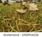 summer garden  with sun light | Shutterstock . vector #1050916226