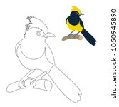 sultan tit bird vector... | Shutterstock .eps vector #1050945890
