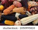 Small photo of Mix of peruvian native variety of heirloom corns from local market in Cusco, Peru that show the biodiversity which is the staple food for Indian Inca and Maya people around Central and South America