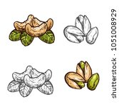 cashew and pistachio nuts... | Shutterstock .eps vector #1051008929