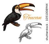 toucan exotic bird sketch icon. ... | Shutterstock .eps vector #1051008944