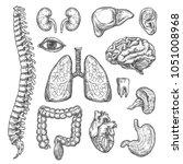 human body organs anatomy... | Shutterstock .eps vector #1051008968