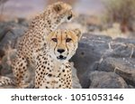 a portrait of two beautiful...   Shutterstock . vector #1051053146