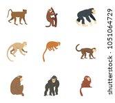 jungle monkey icon set. flat... | Shutterstock . vector #1051064729